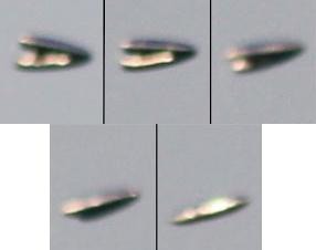 ufo-turkey